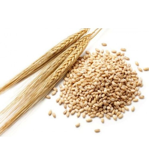 Barley / Jow